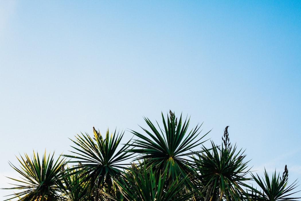 Krem z filtrem na lato – dlaczego warto go mieć?