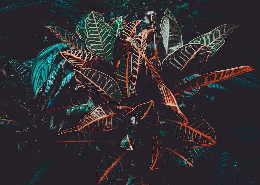 macro photo of black plants