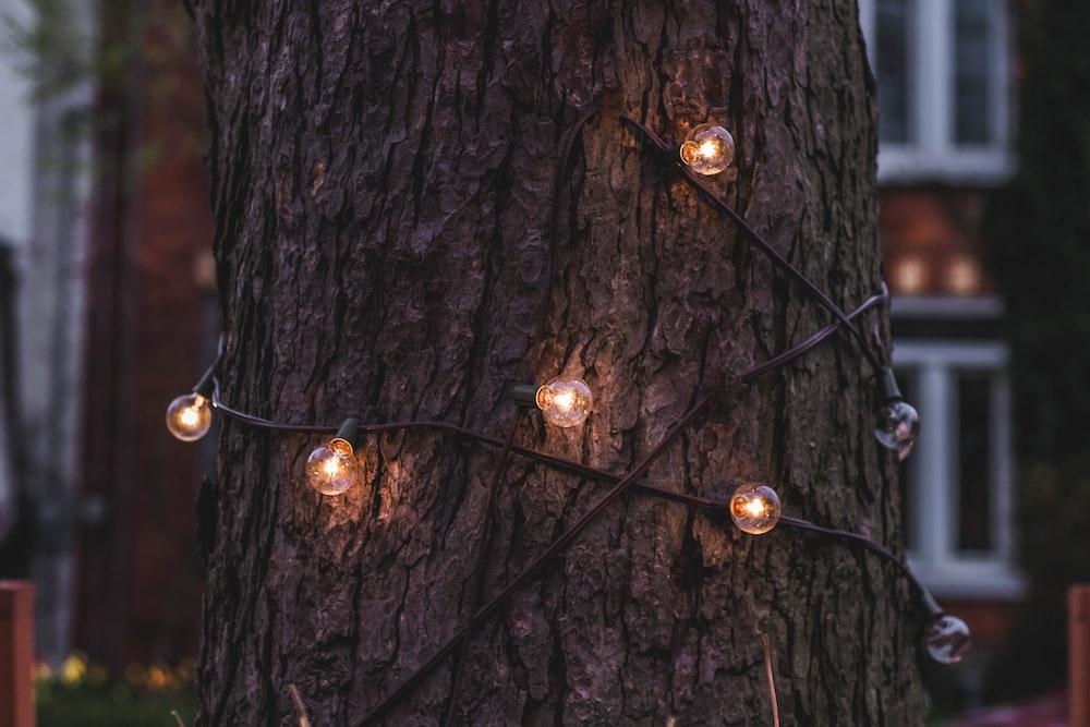 light bulbs wrap around tree