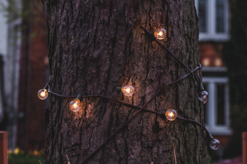 light bulbs wrap around tree