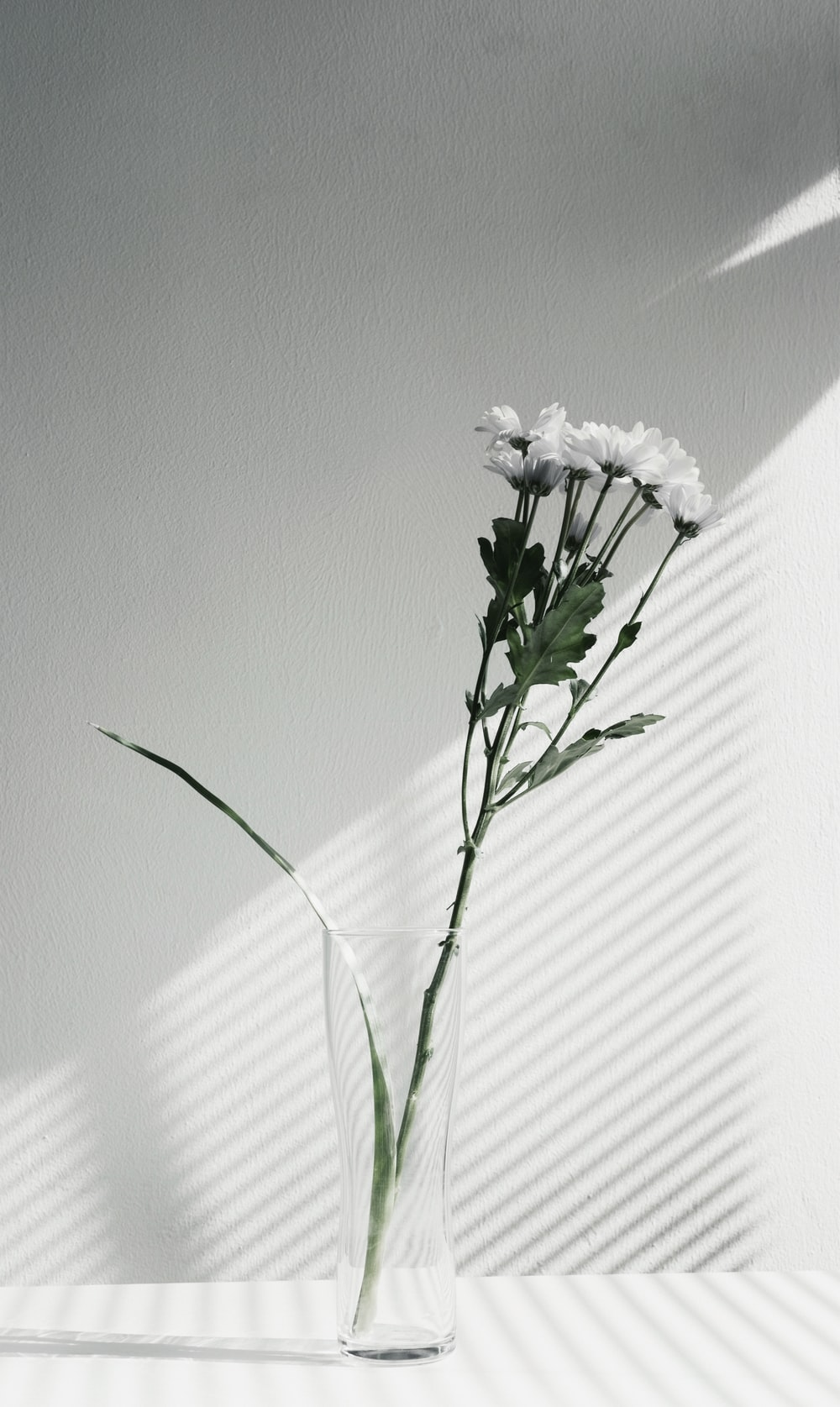 Minimal flower vase photo by imani clovis imaniclovis on unsplash a desaturated shot of white flowers in a glass vase mightylinksfo