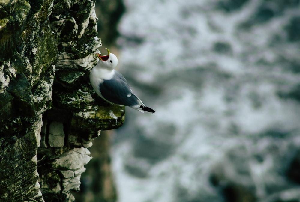 black and white bird on rock