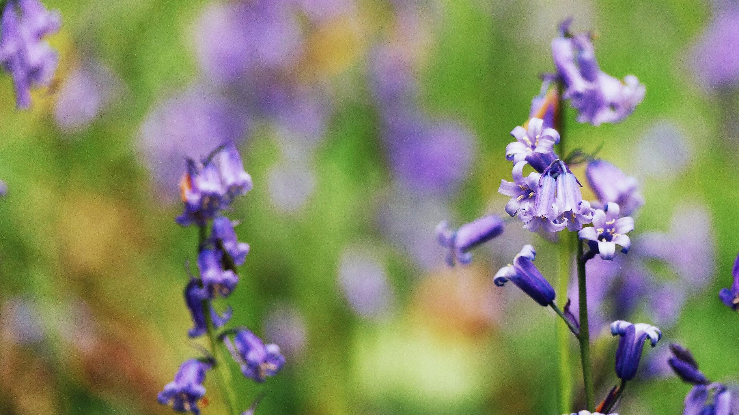Purple wildflowers grow in a field