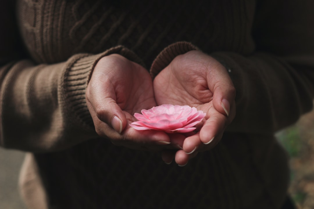 A person's cupped hands holding a delicate pink flower