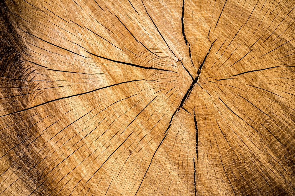 wood stump pictures download free images on unsplash