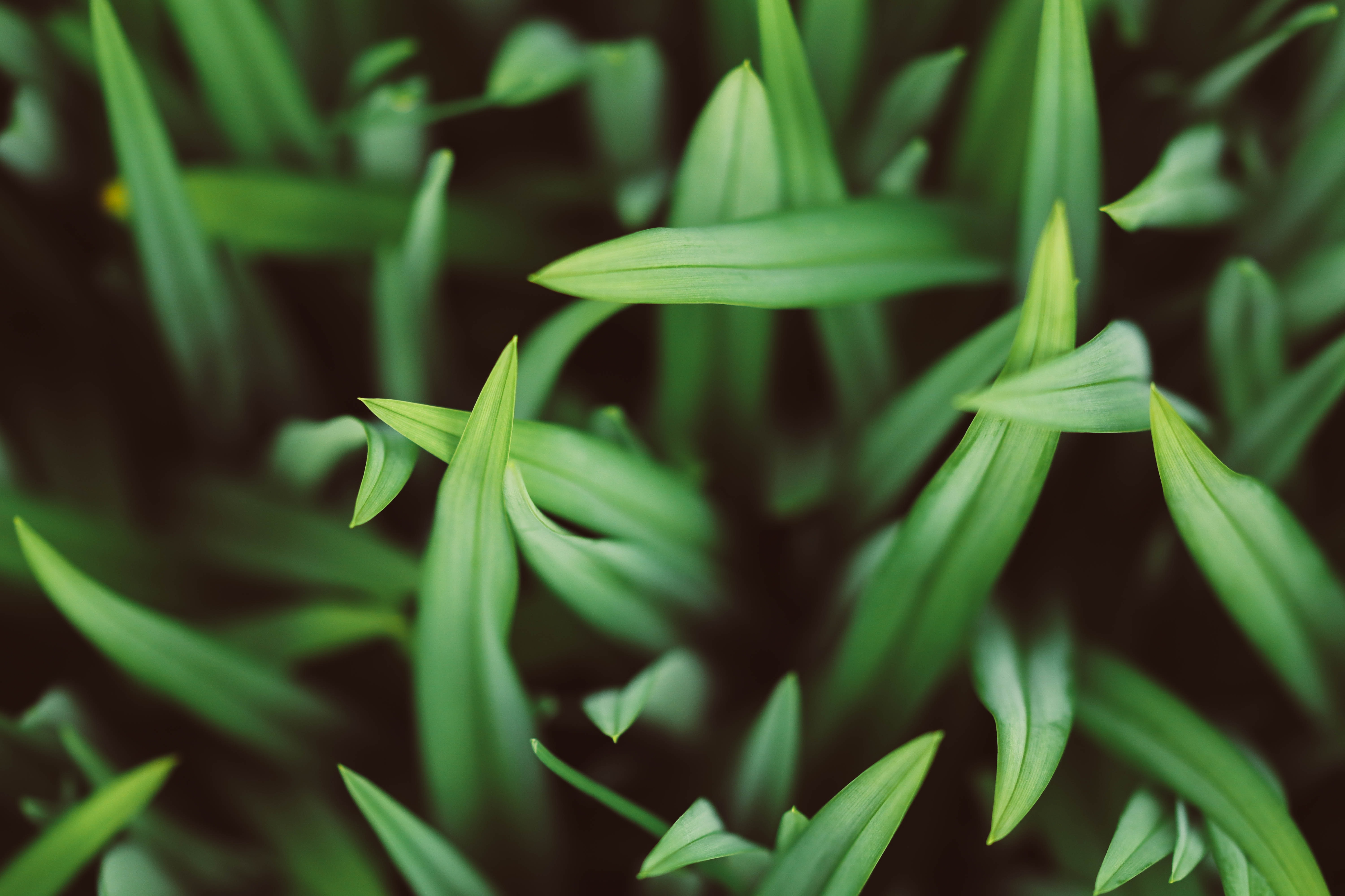 selective focus photography of green grasses