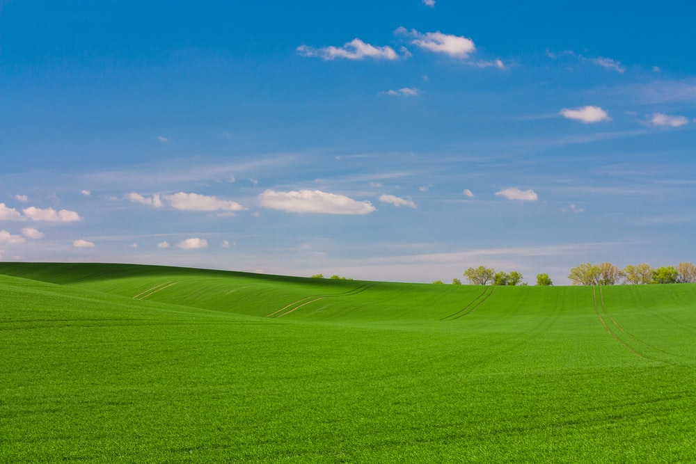 green grass fiels