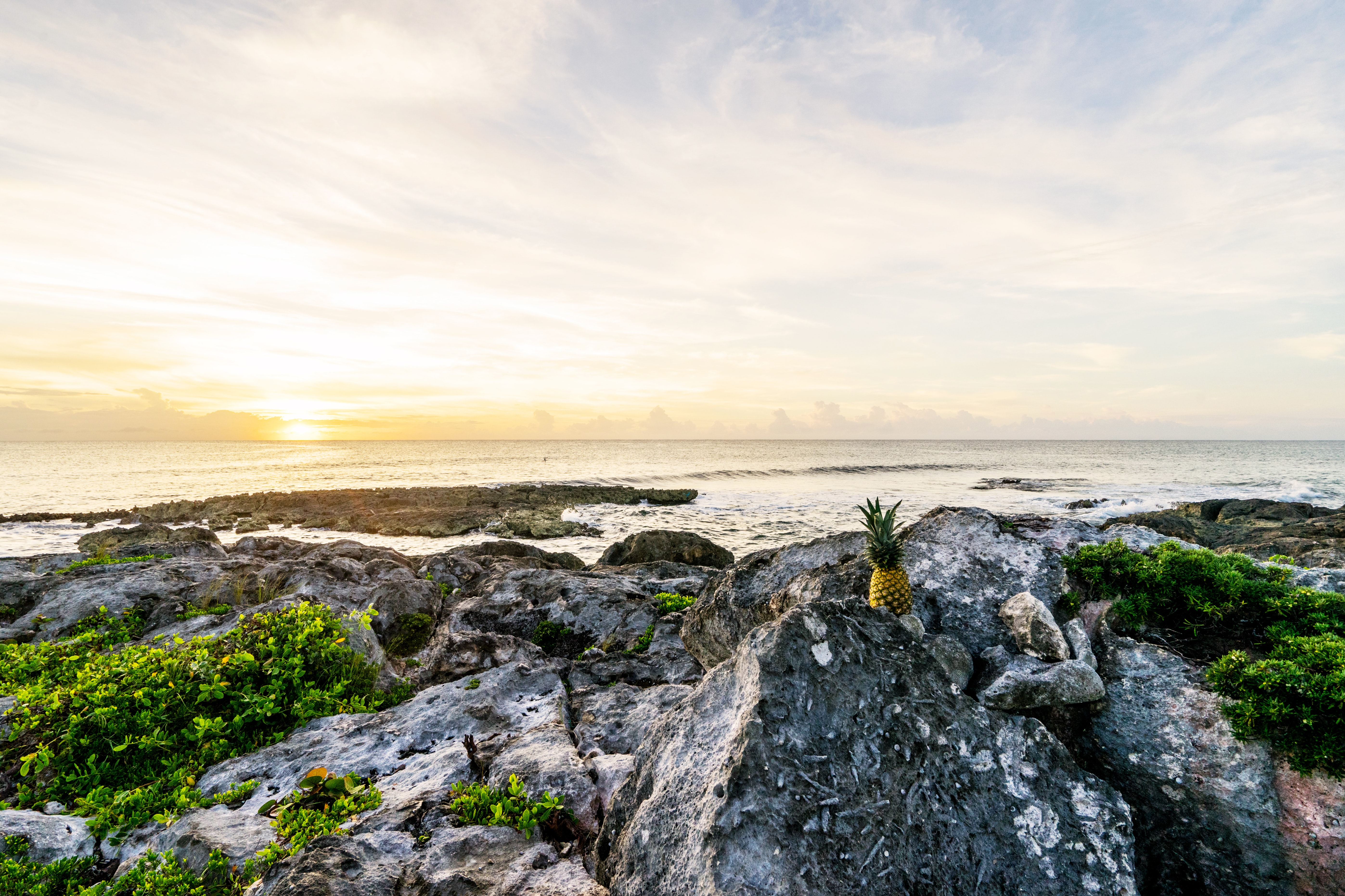one pineapple on boulders facing sea and sunset