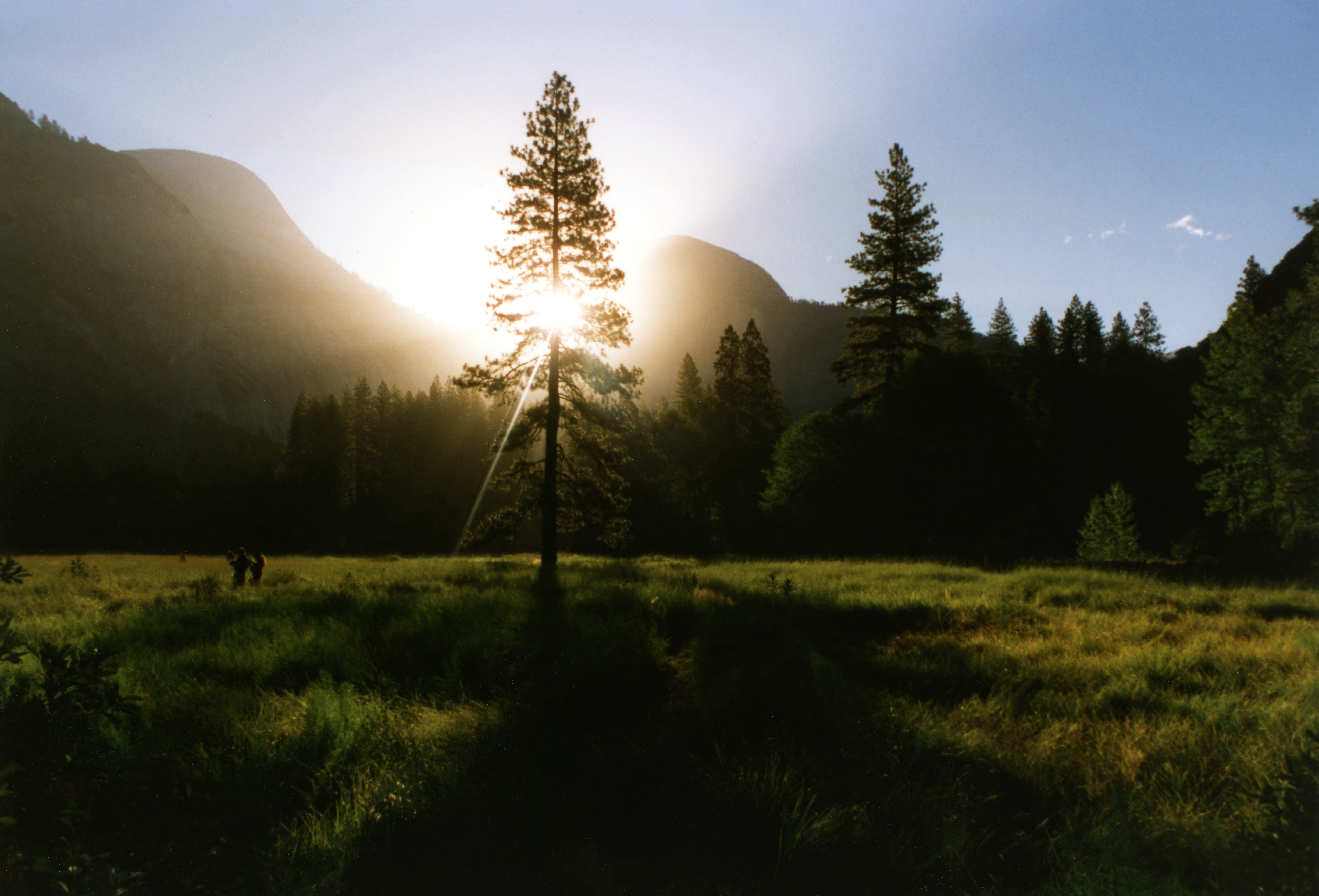 Two people in a green meadow with sparse trees during sunset