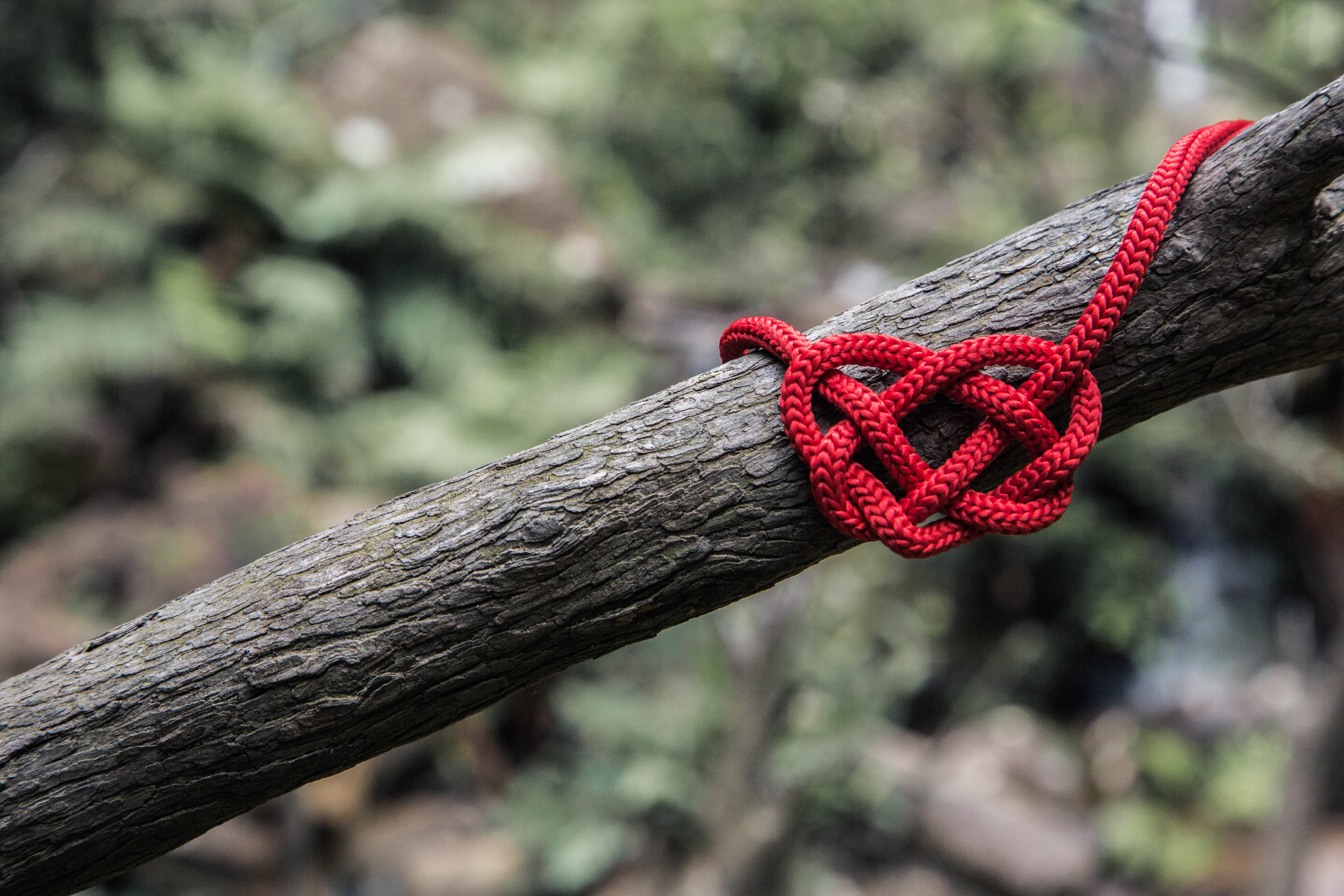 red rope on three branch
