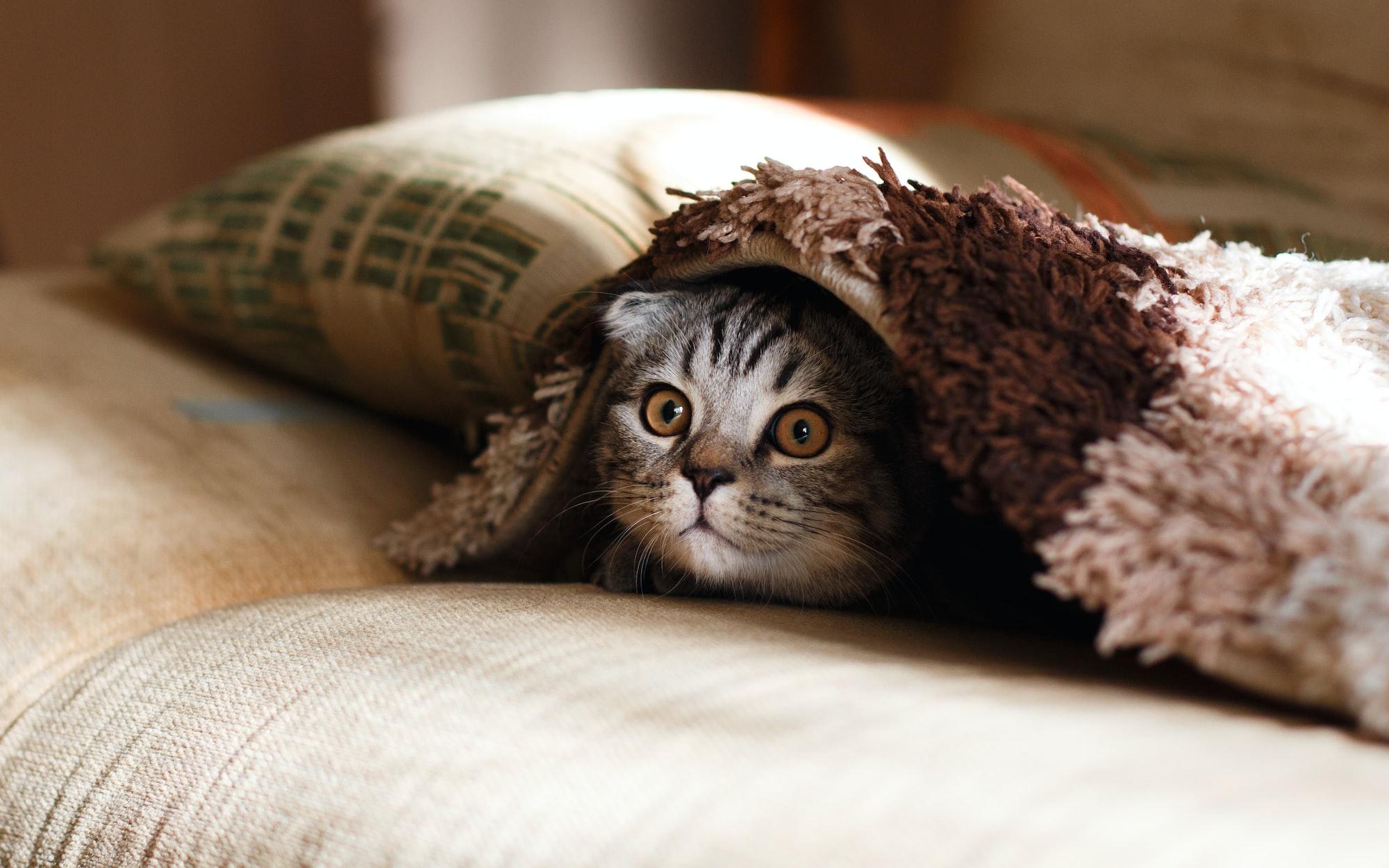 #4 时尚足迹,毕业舞会,棉花糖实验与怕黄瓜的猫