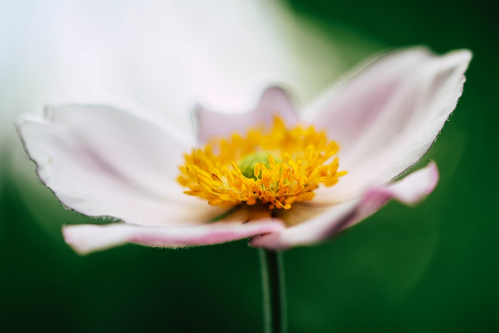 selective focus of pink petaled flower blooming at daytime