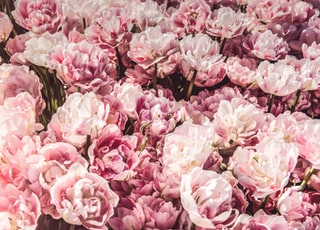 bed on pink peony flowers