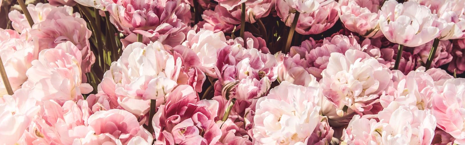 Google Pixel In Bloom Collection 29 Best Free Bloom Flower Plant