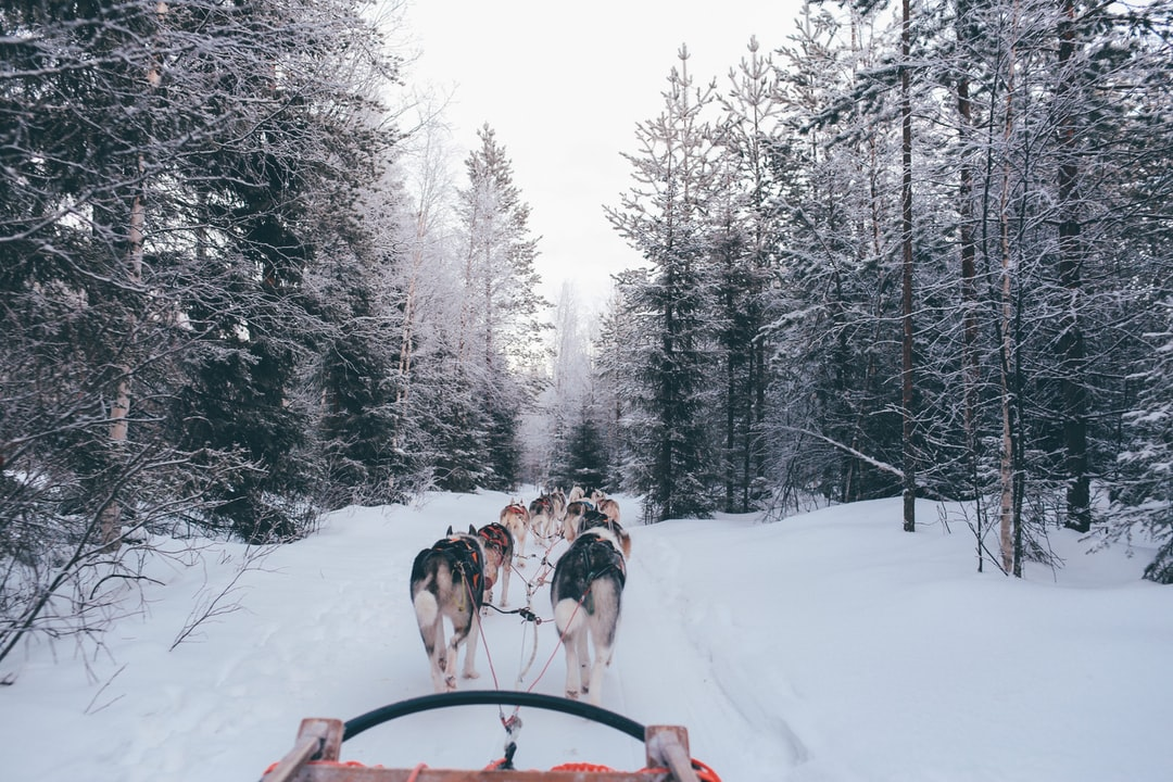Dog sled pulled by dogs
