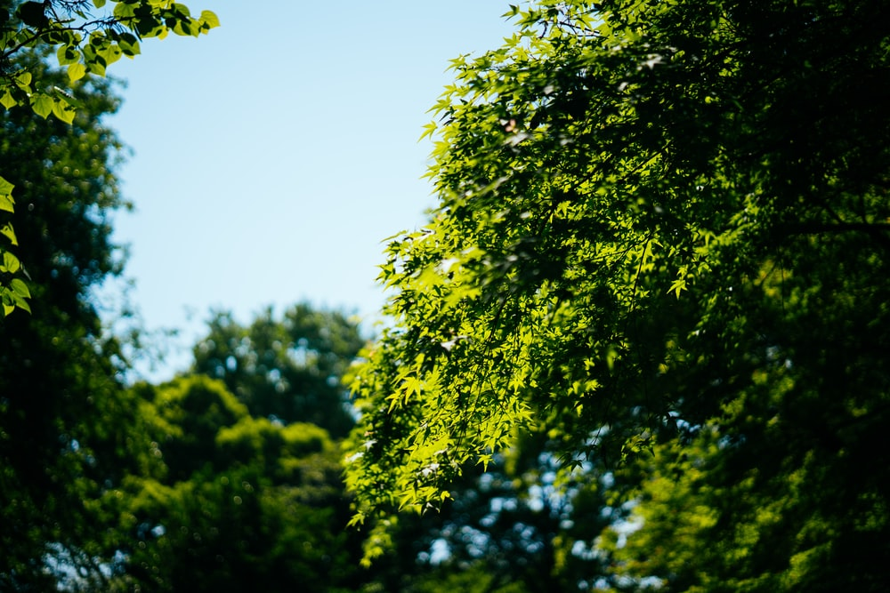 green trees during daytime