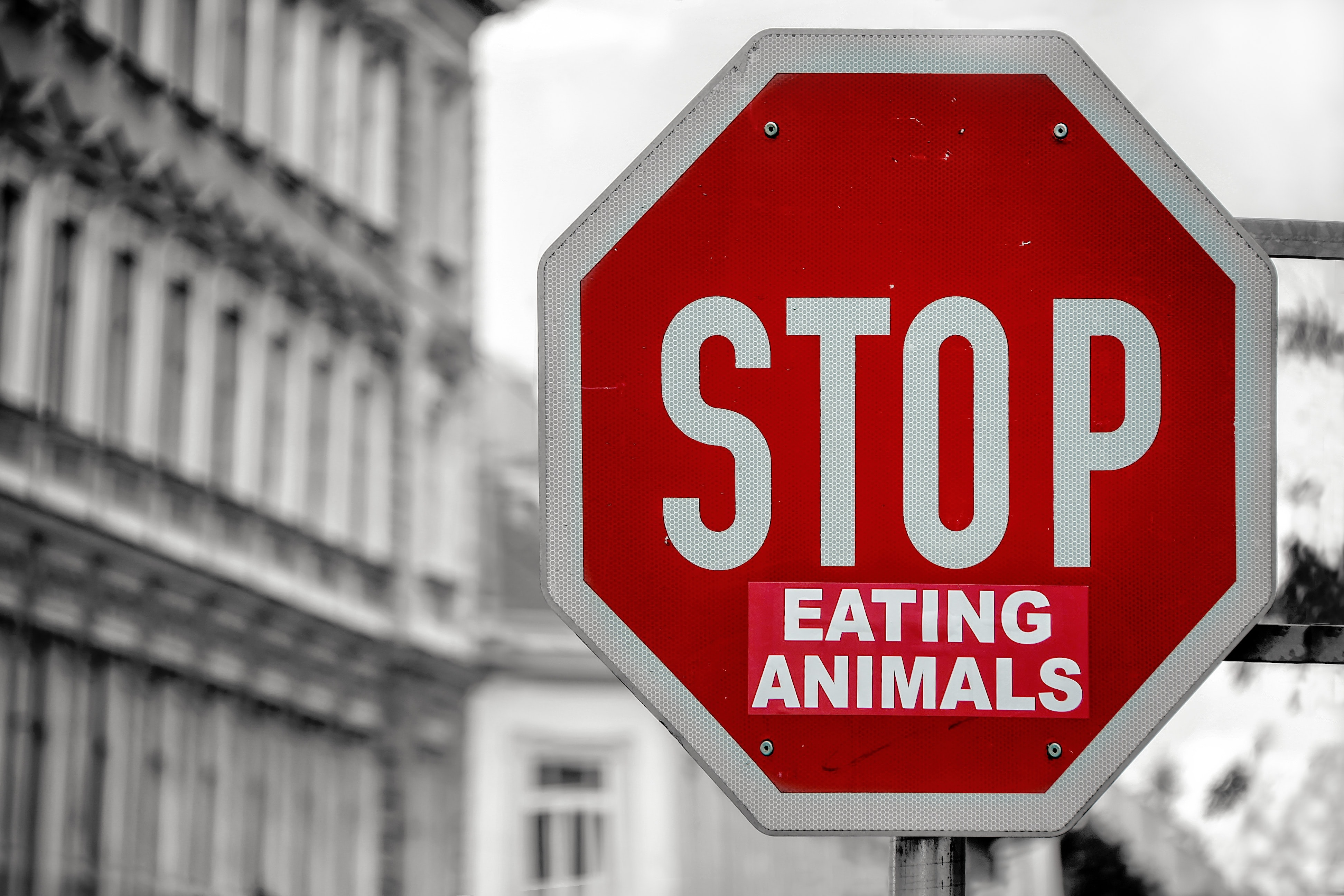 Vegetarian PETA sign reads stop eating animals