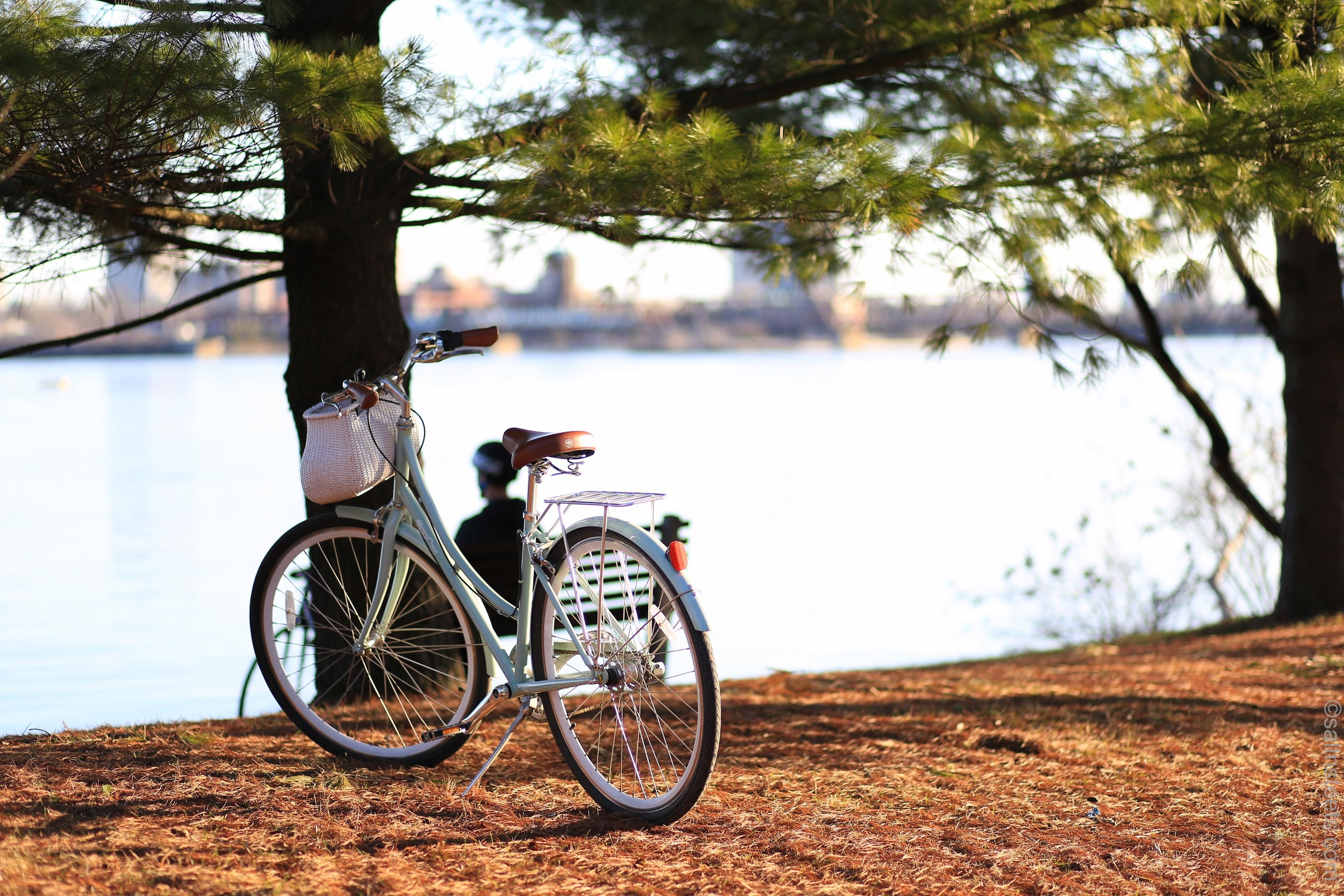 bicycle near tree