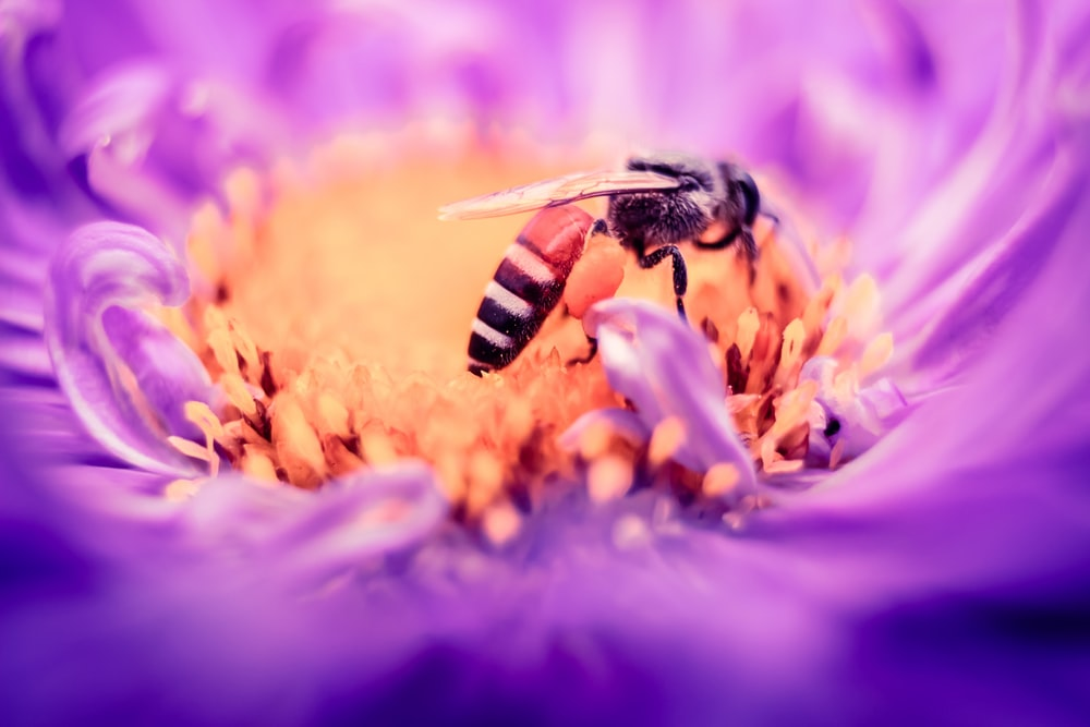 black and white bee on yellow and purple flower