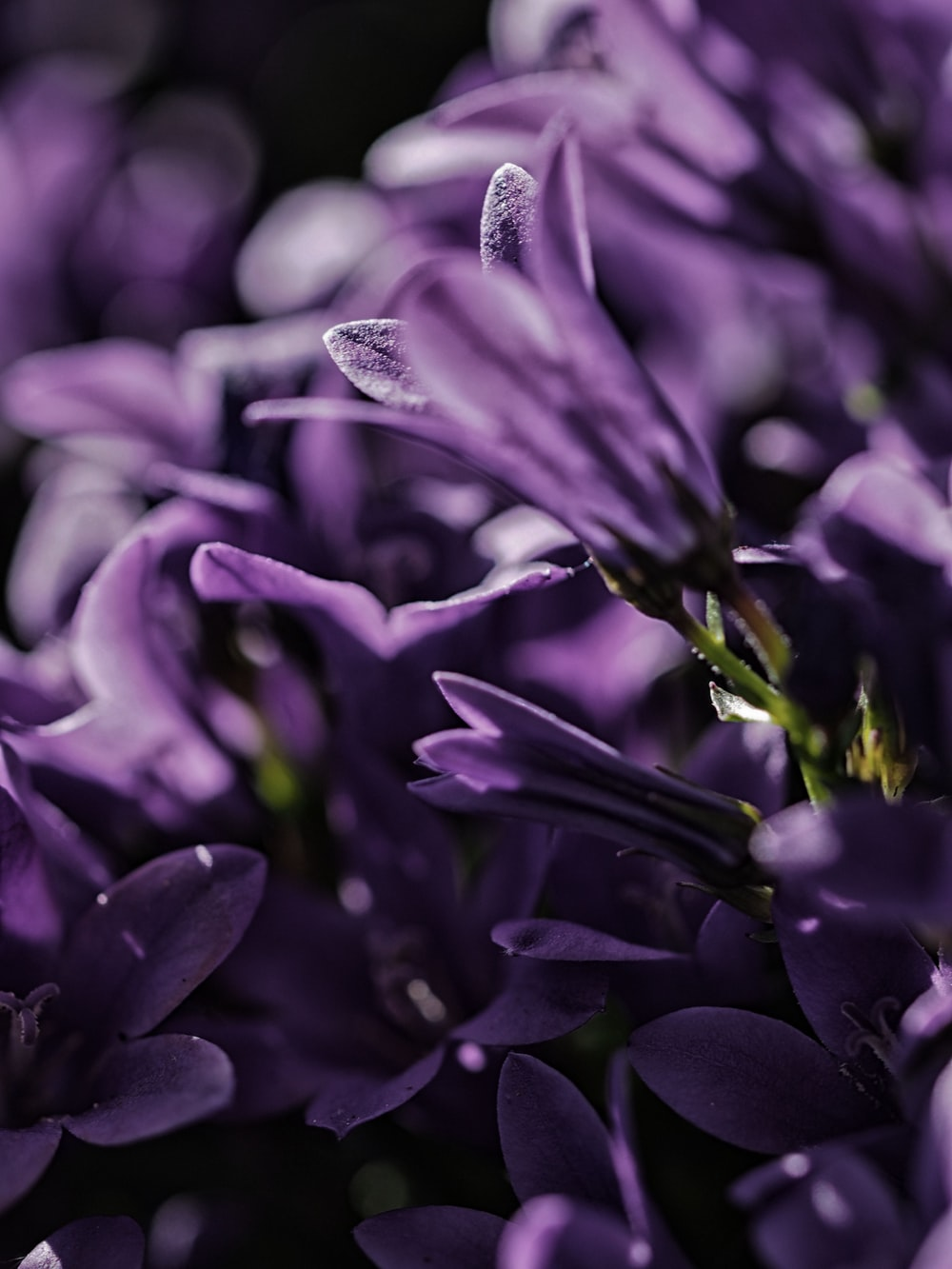 focus photo of purple petaled flower