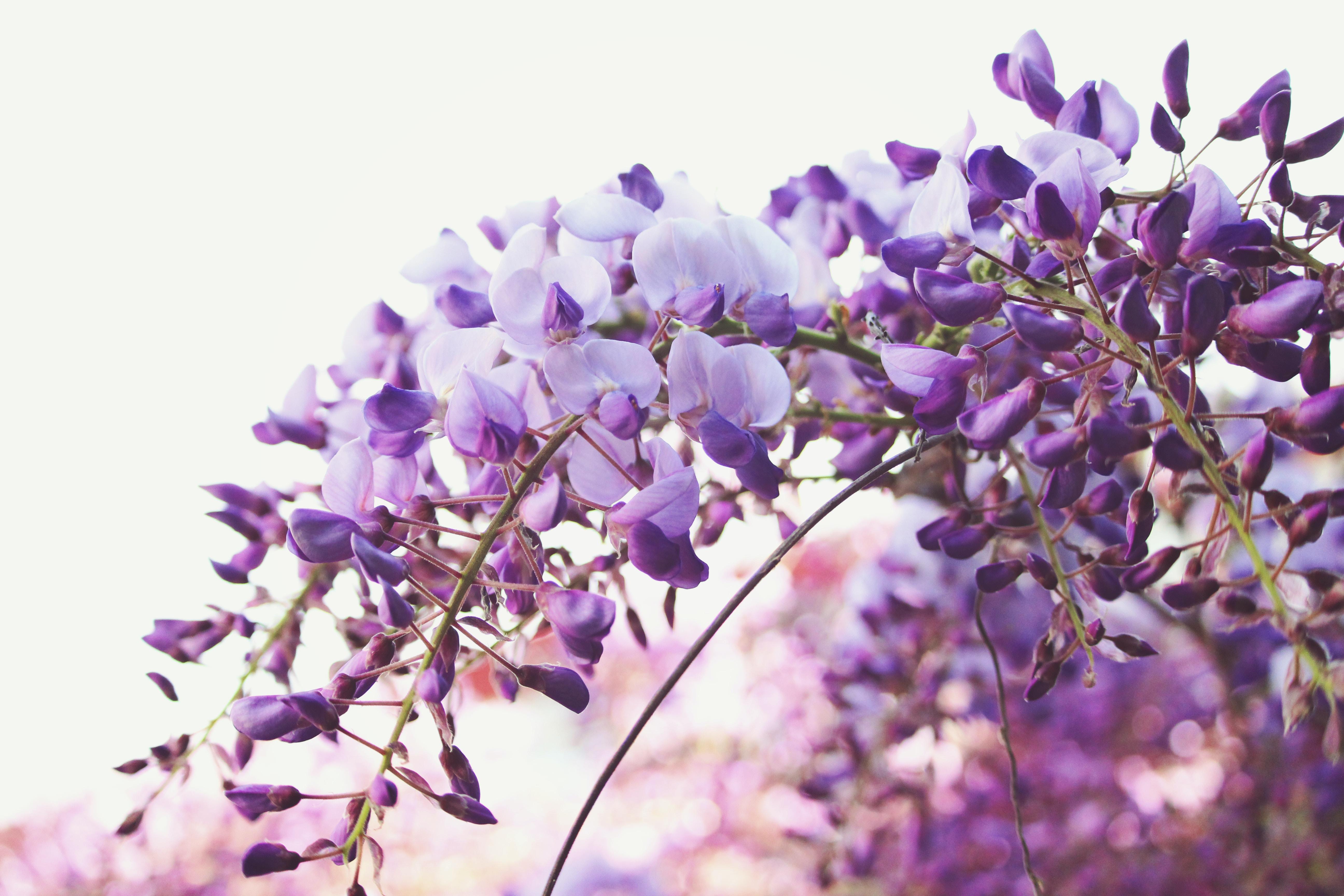 tilt shift lens photography of purple flowers