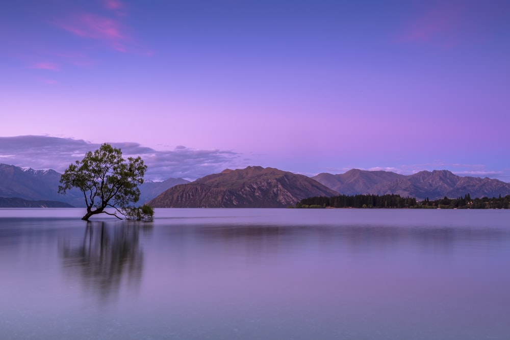 tree on body of water near mountains