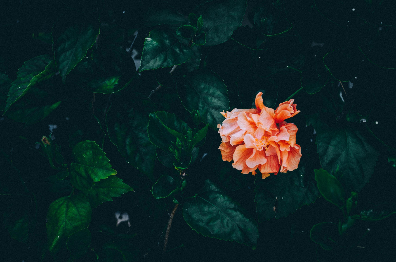 low angle photo of orange petaled flowers