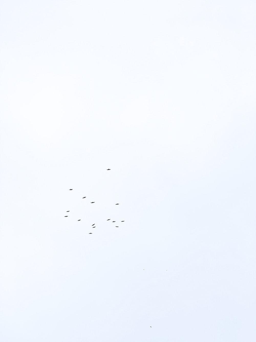 flying bird under clear skies