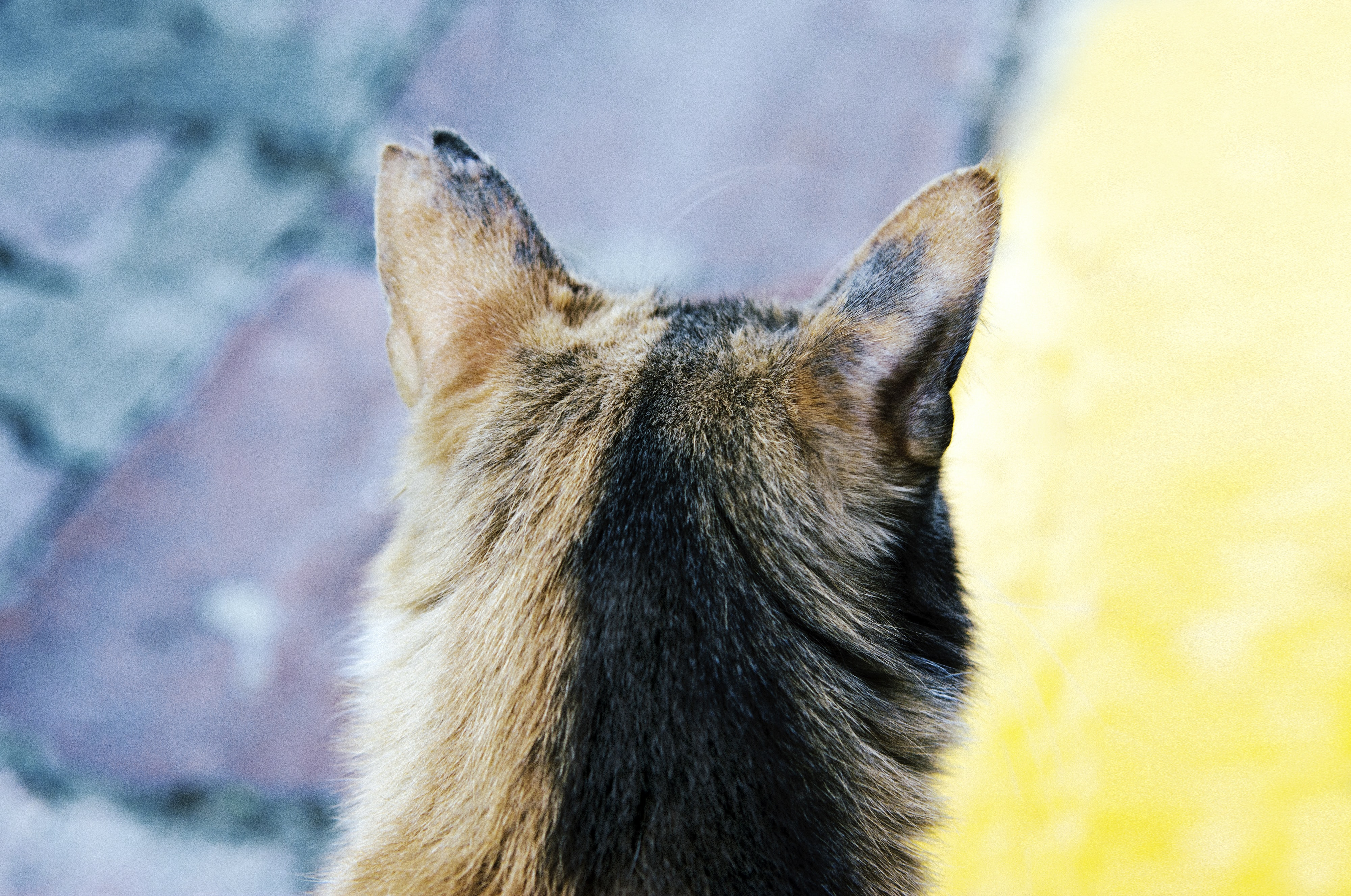 Macro of the back of a dog's head