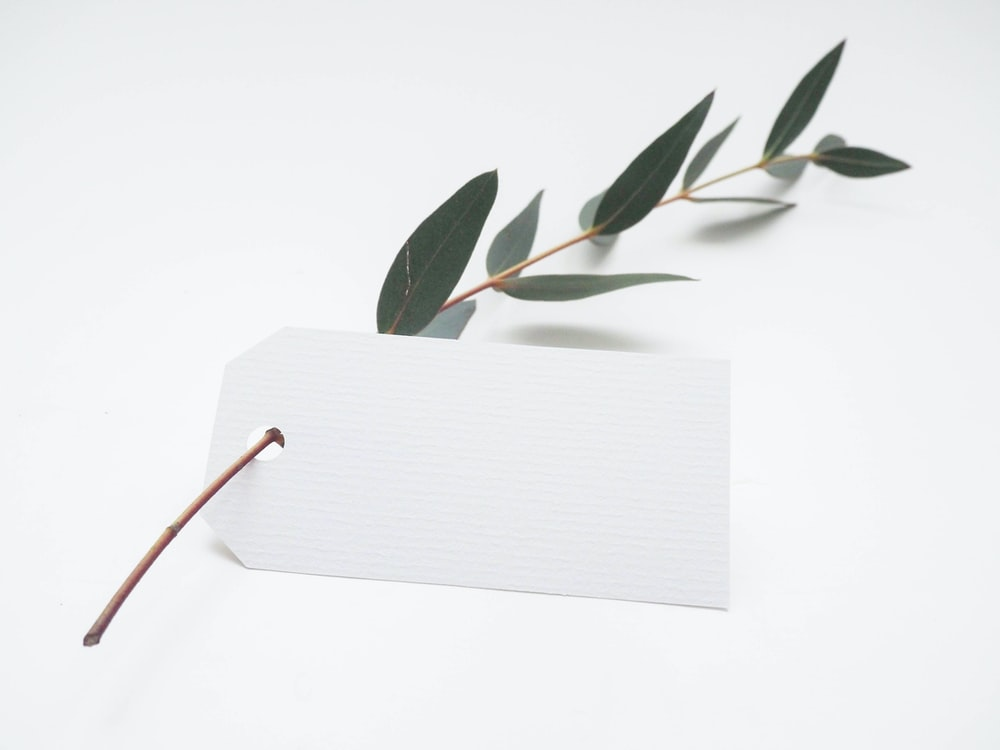 green leaf with white card