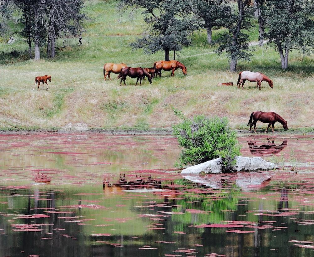 horses near body of water