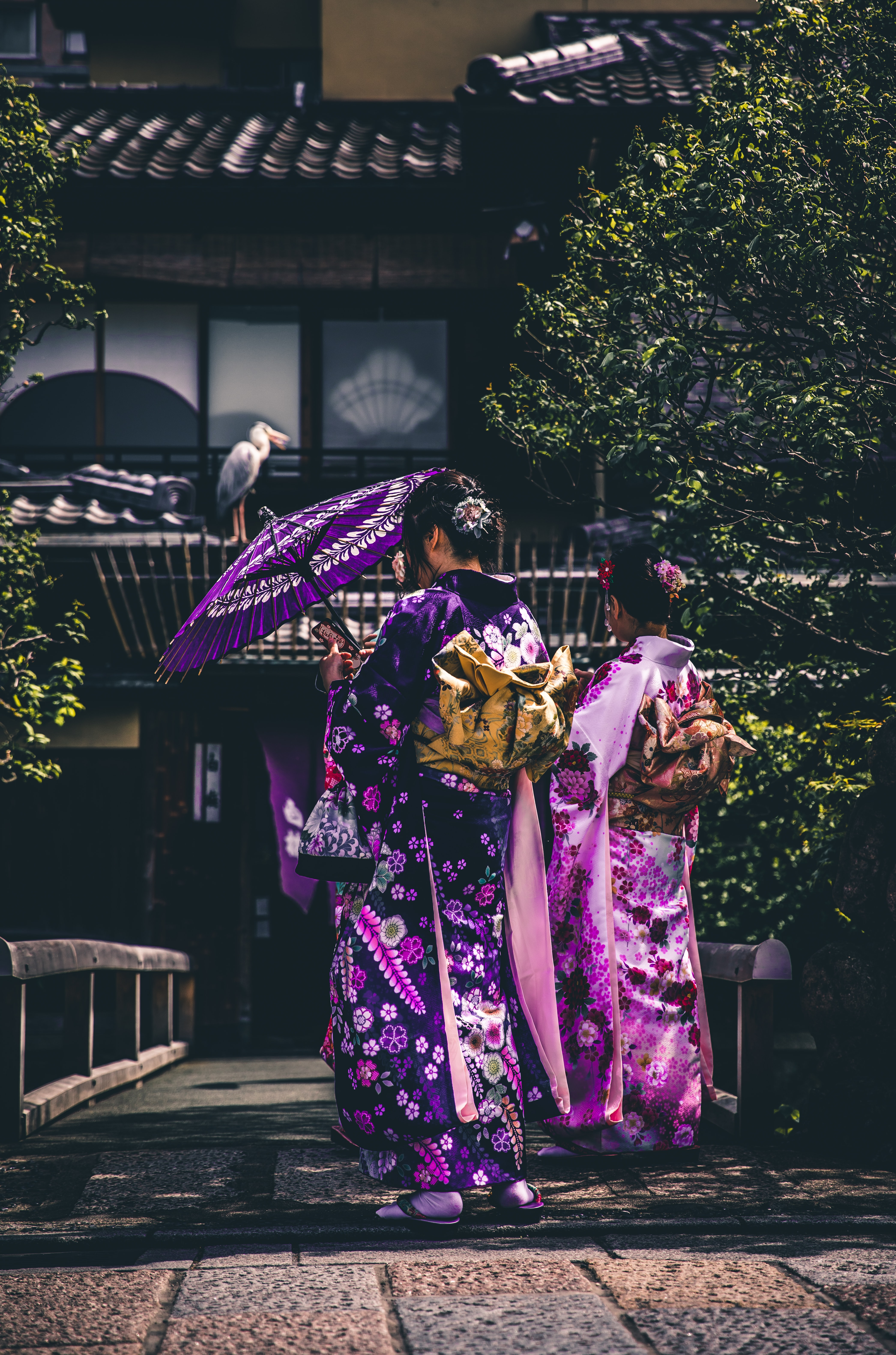 Woman carrying umbrellas in elegant purple and pink Japanese geisha robes