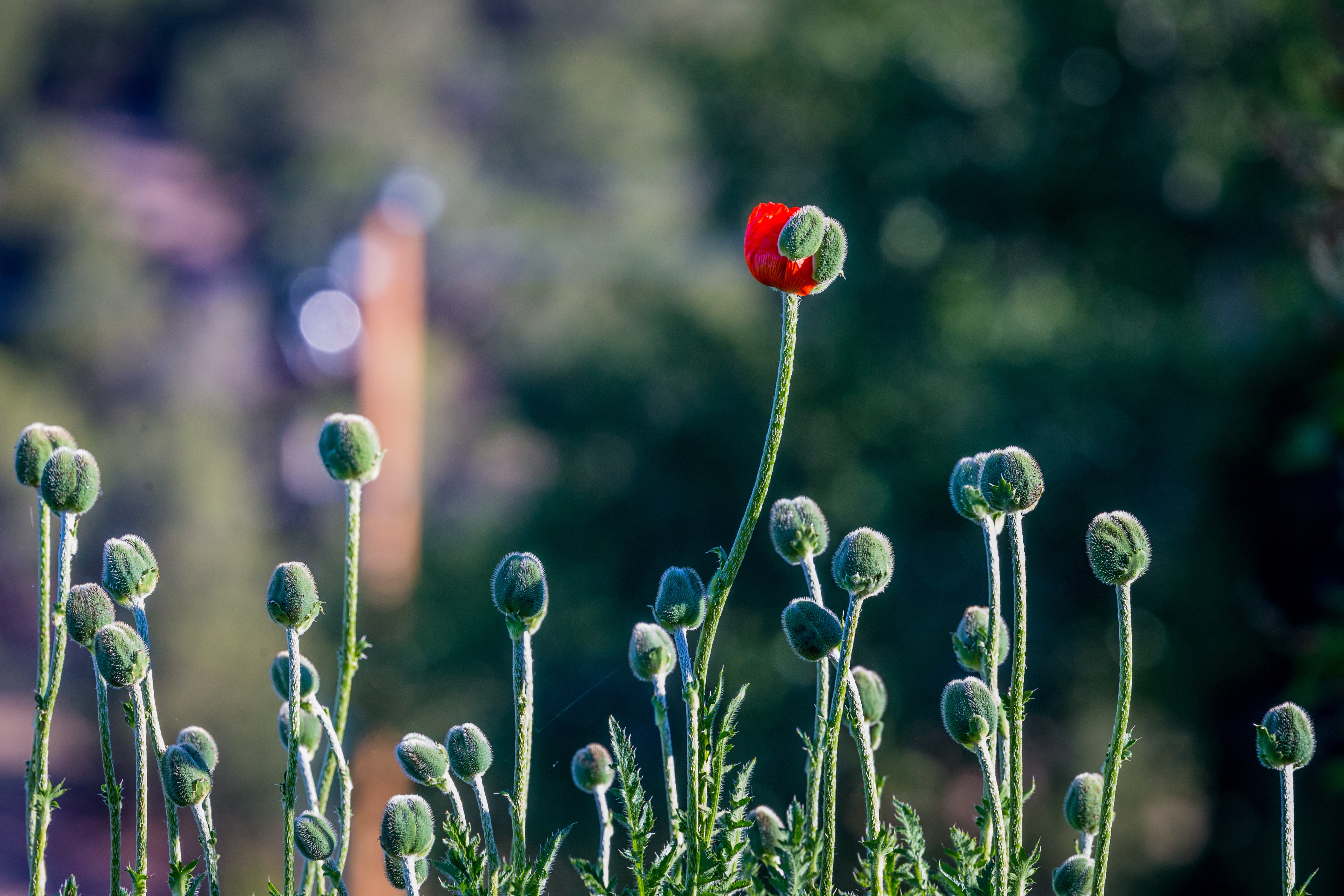 focus photography of green and red petaled flower