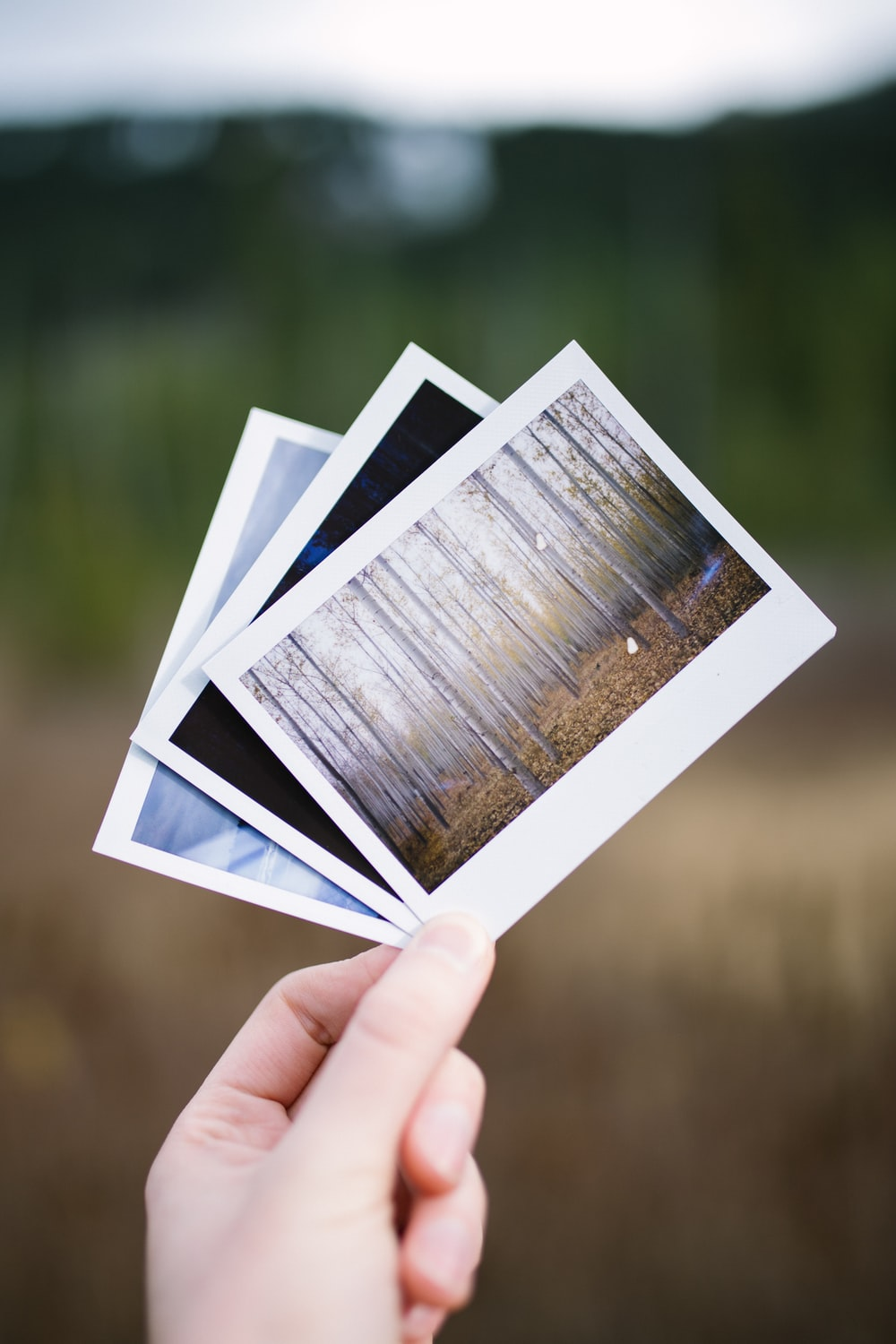 person holding three assorted pictures