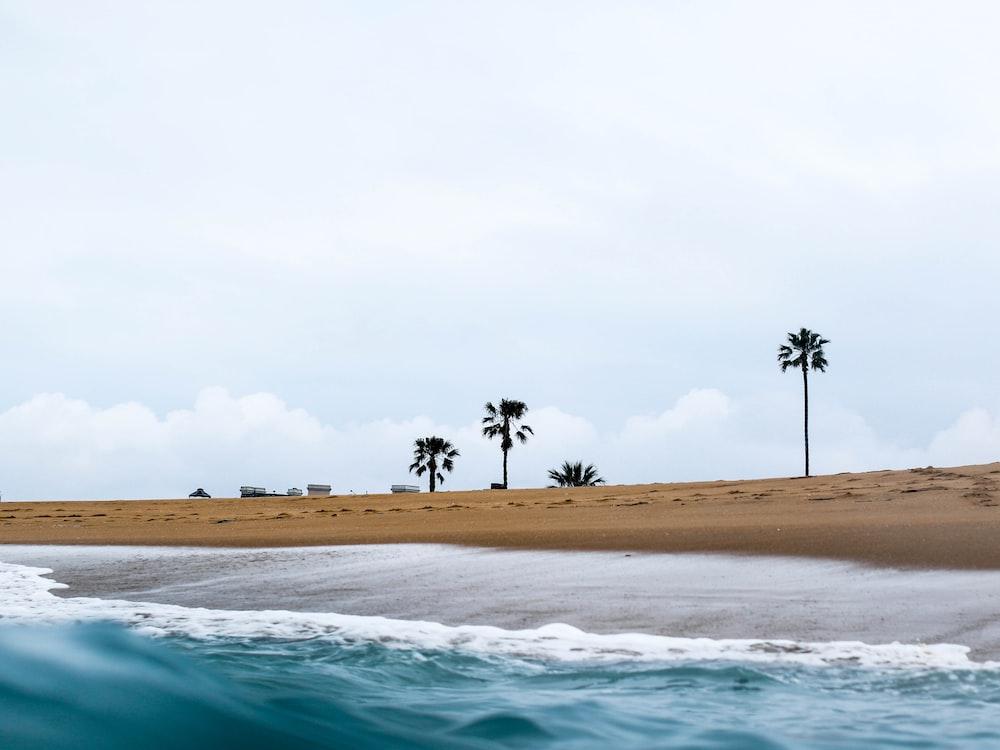 three palm trees under white sky