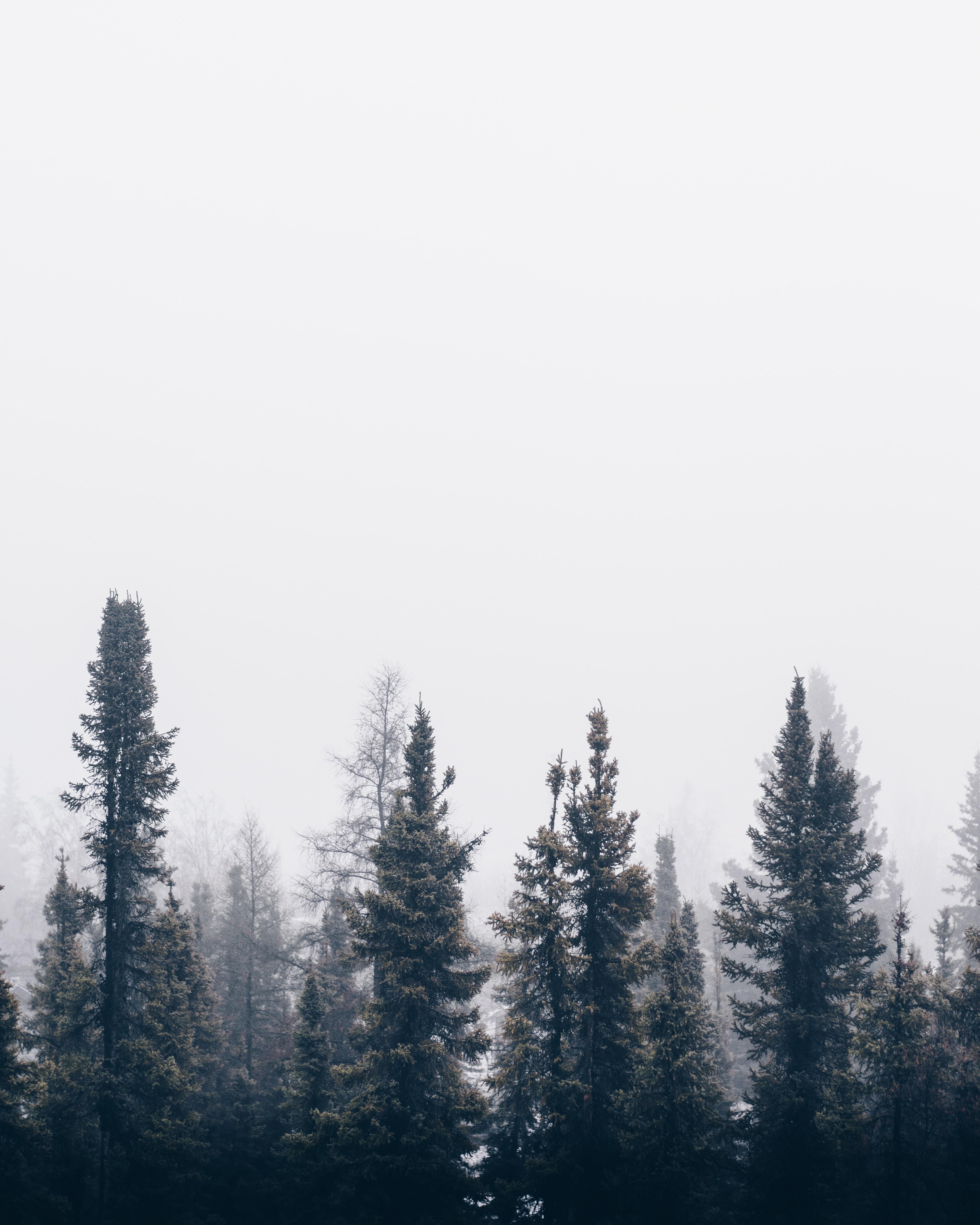 green foggy tree