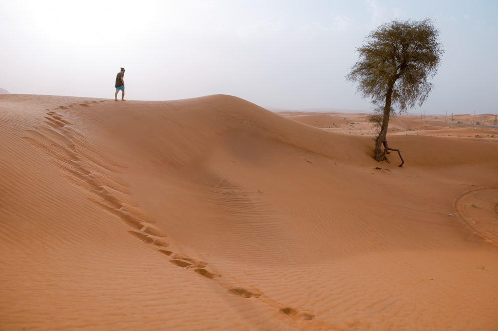 man walking on desert with one tree during daytime