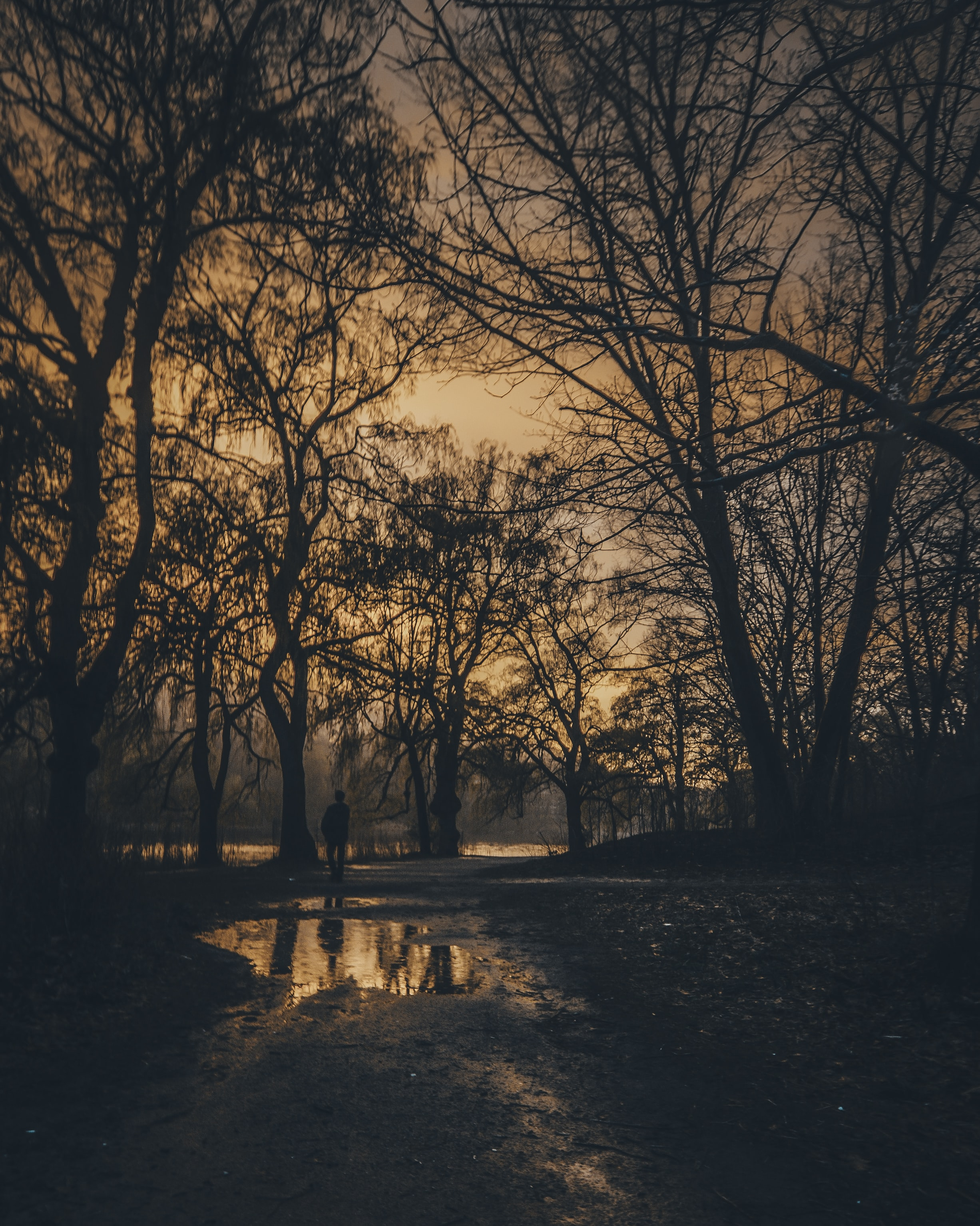 The sun sets over Toronto's High Park as a man walks through the trees, his silhouette reflecting upon a puddle