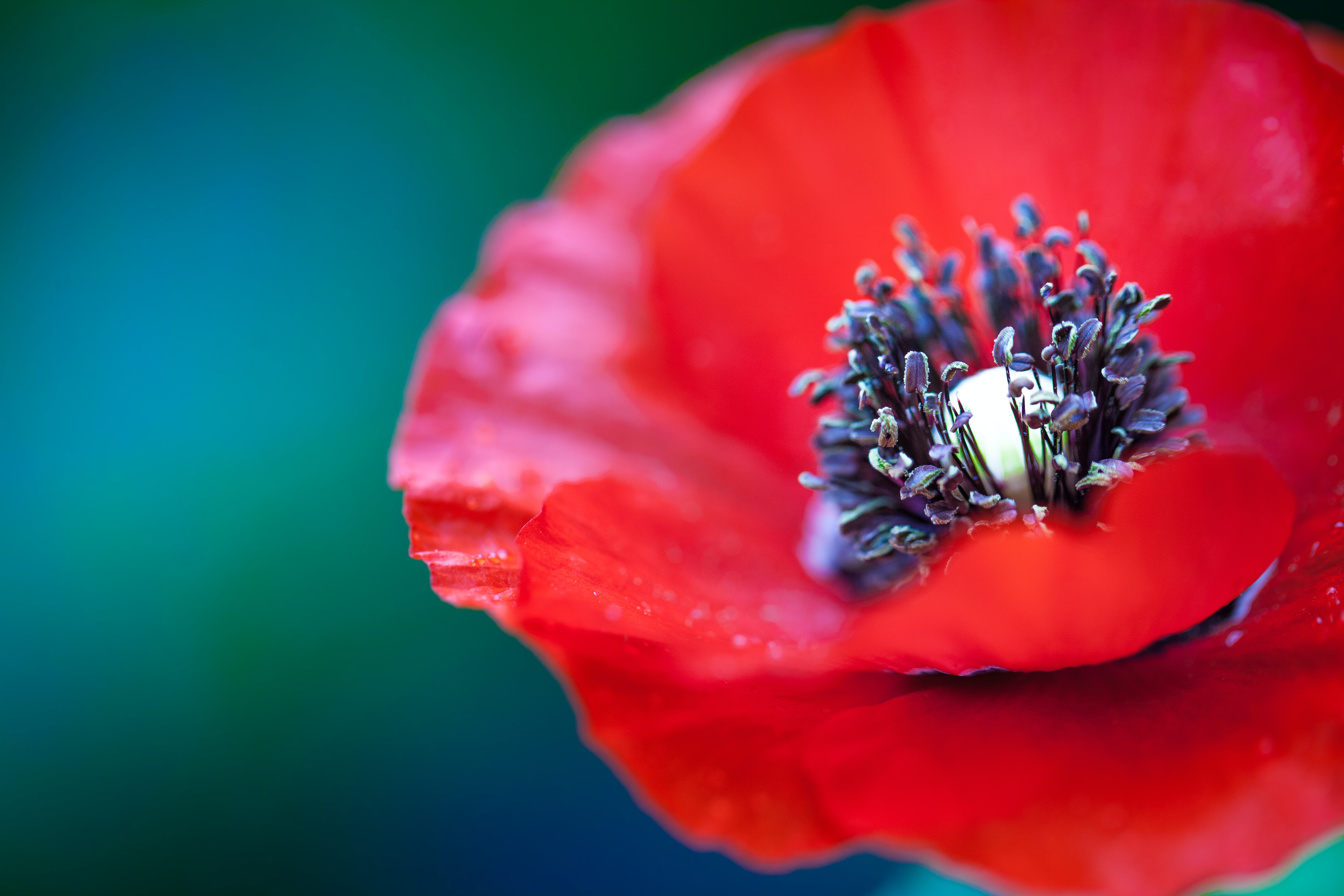 selective focus photography of red petaled flower