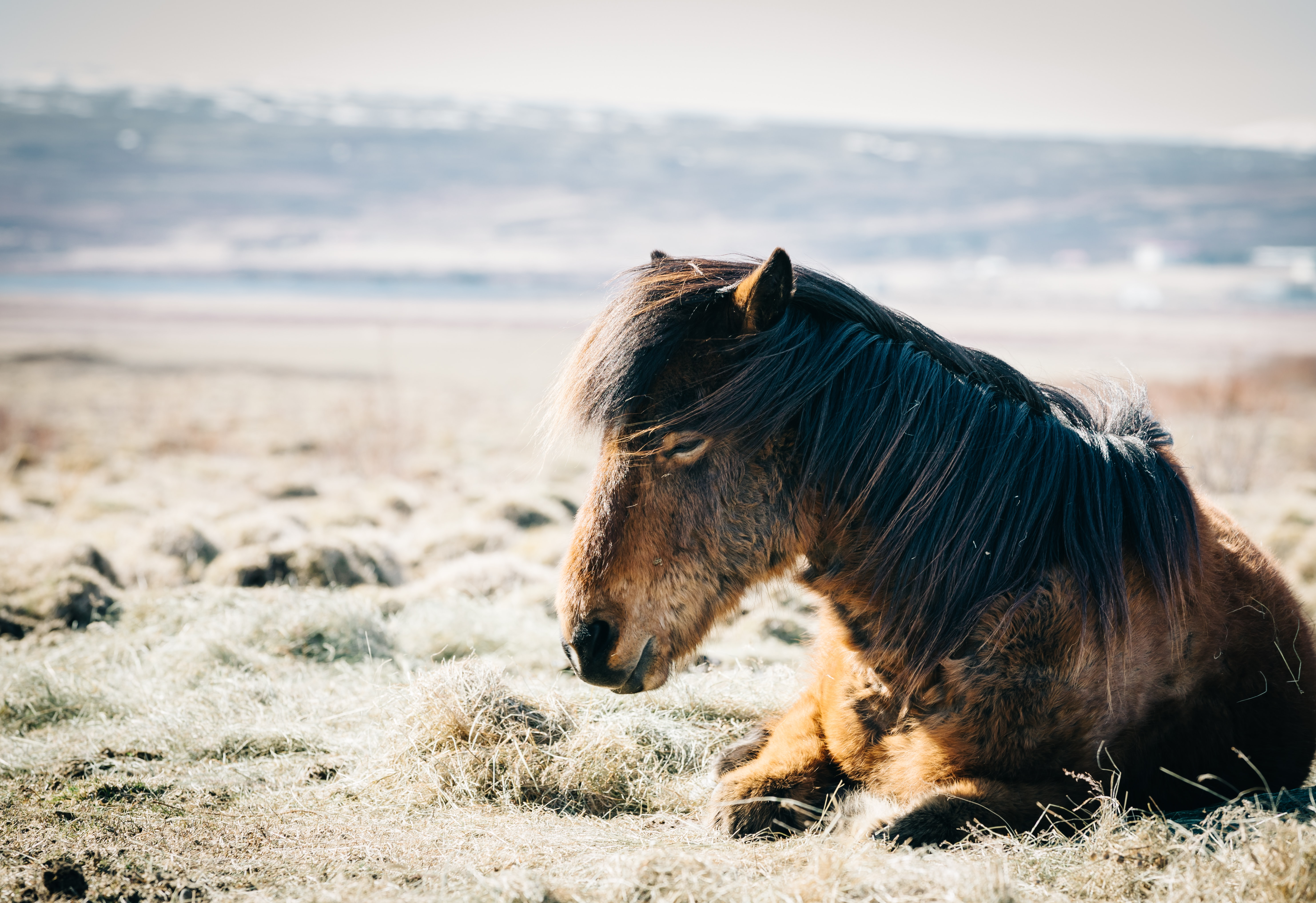 brown horse sitting on grass near beach