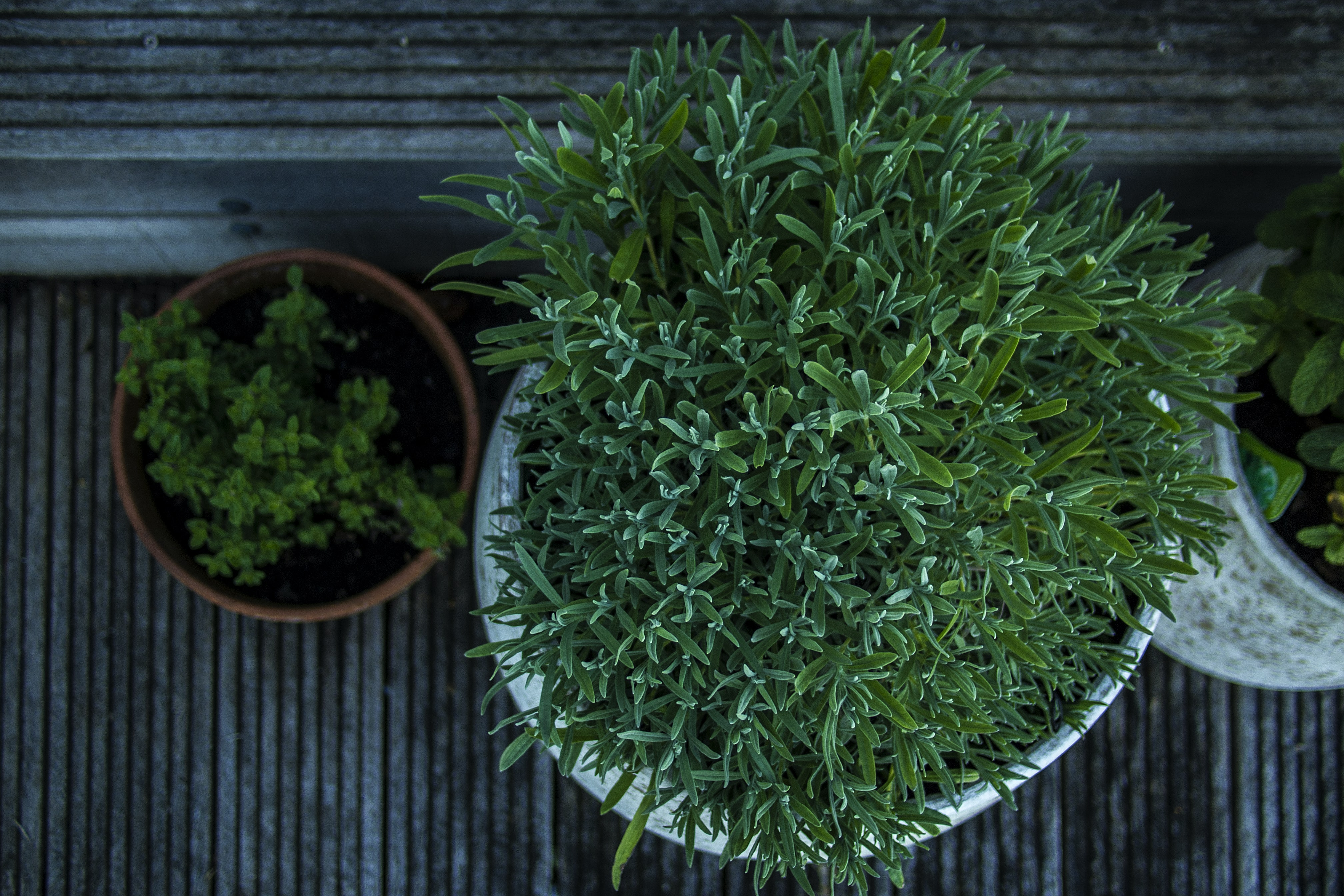 Overhead shot of green potted plants on a home patio