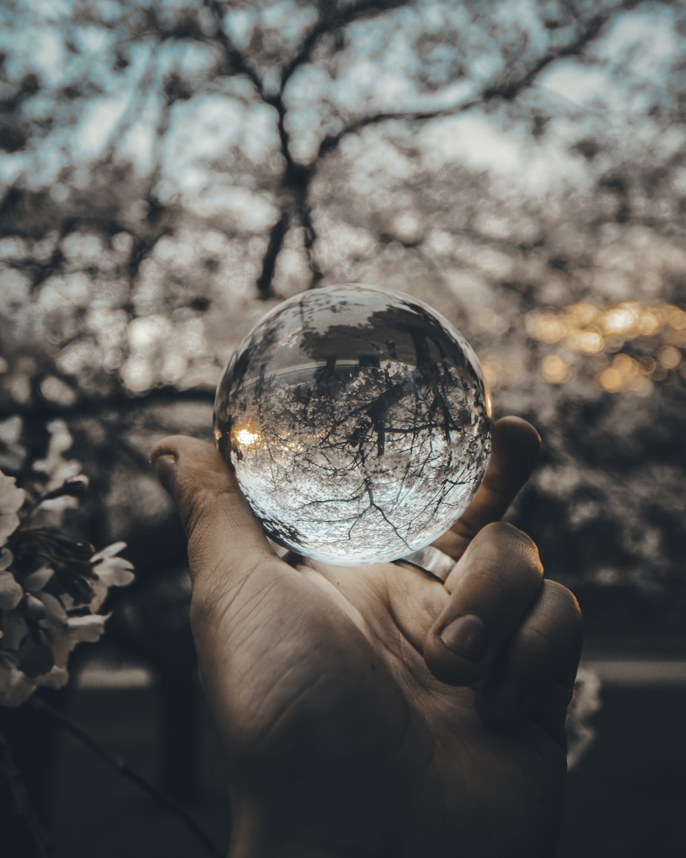 person holding round glass ball