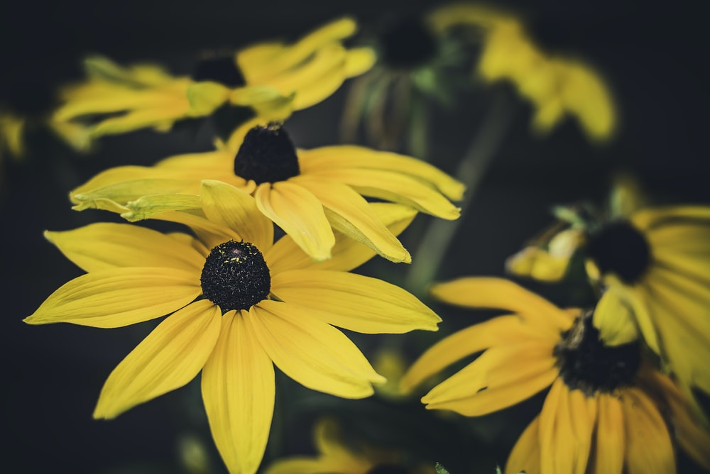 close shot of yellow flowers