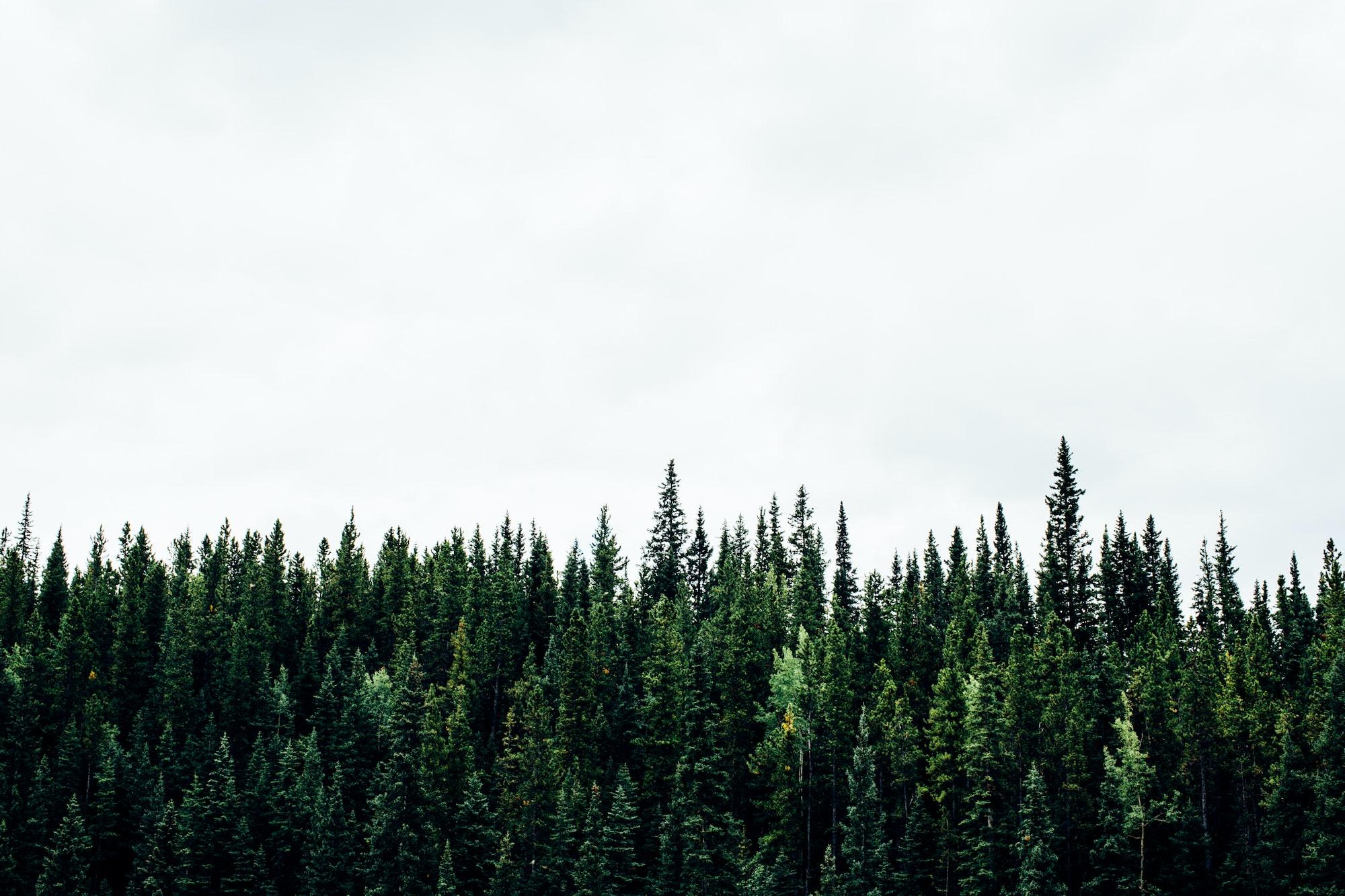 Canadian Treeline