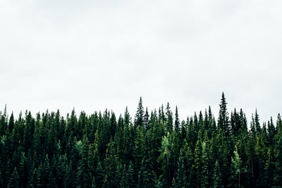 green plants with white background forest teams background