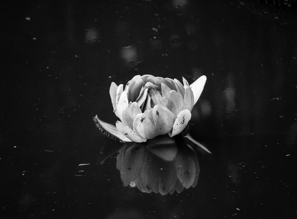 grayscale photography of peony