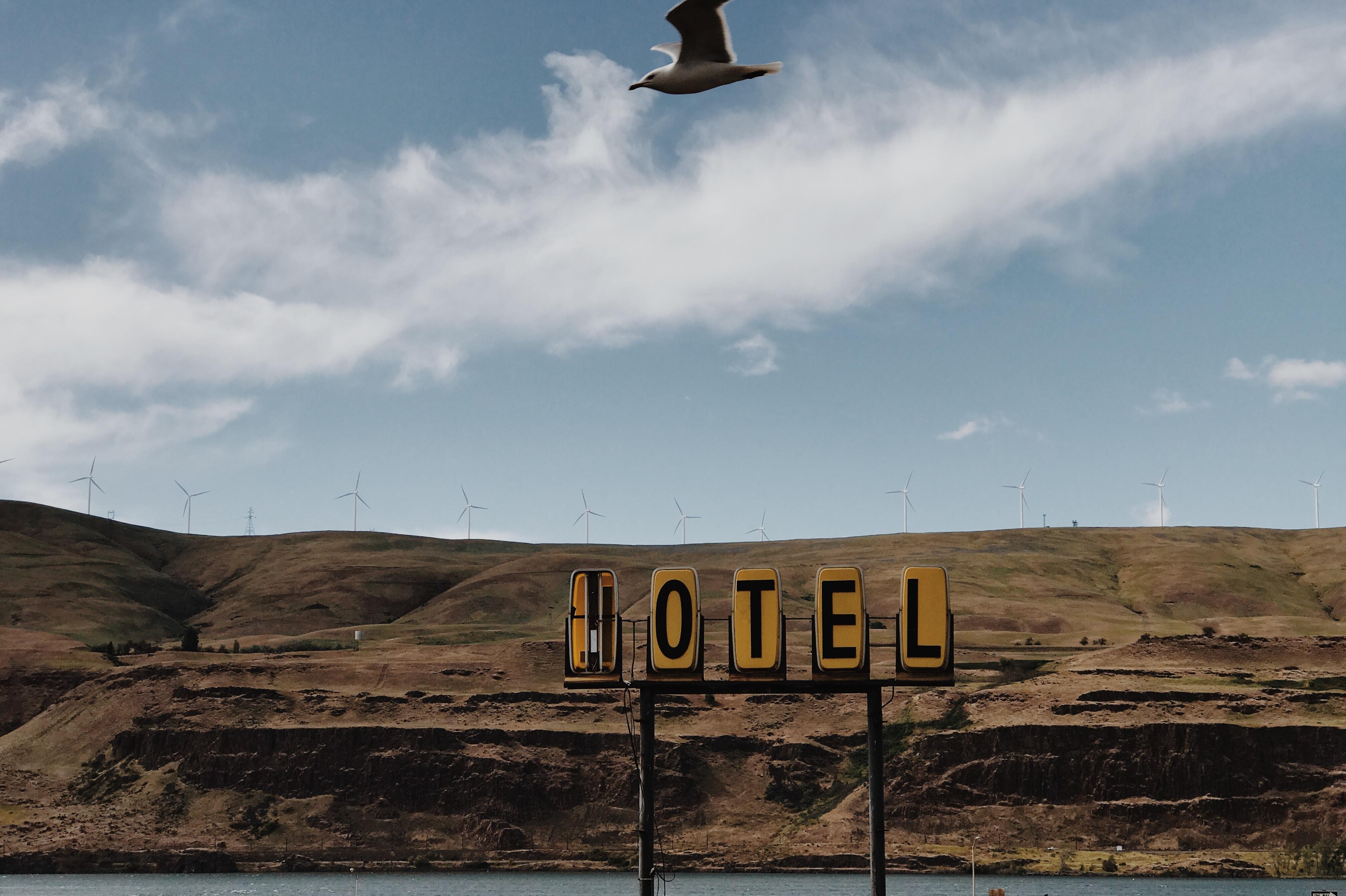 gull flying above motel signage