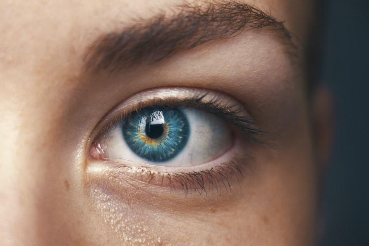 Eyes of Intelligence