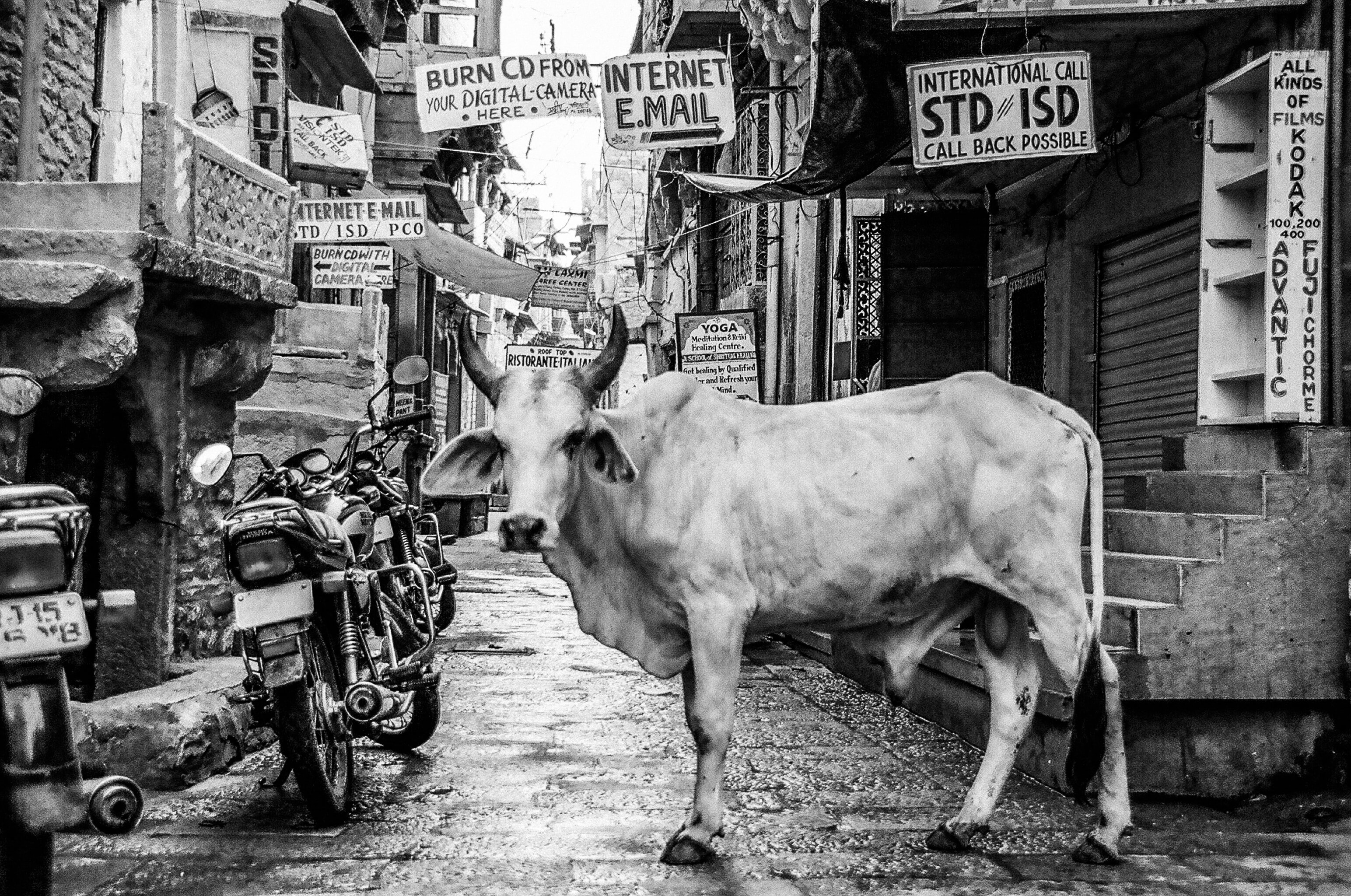 Black and white shot of bull in alley with signs and motorbike