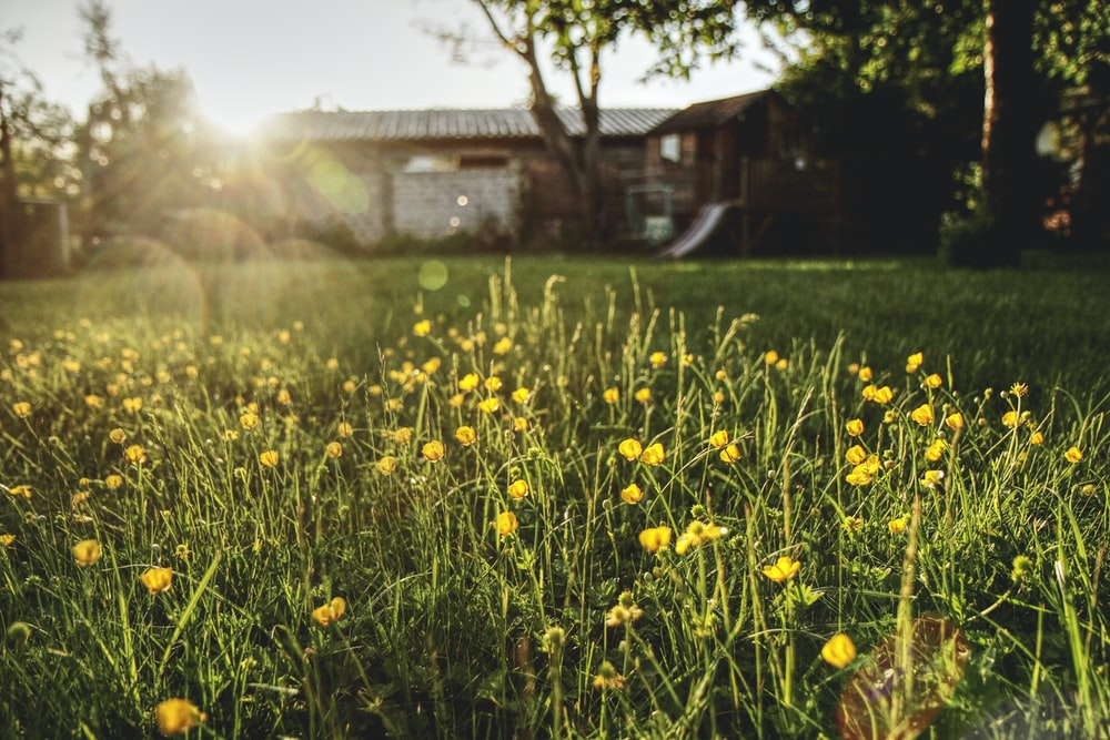 yellow-petaled flower by house